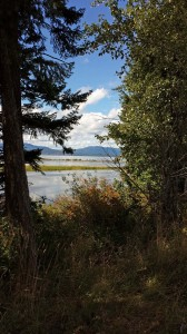 View of Lake Pend Oreille through the trees