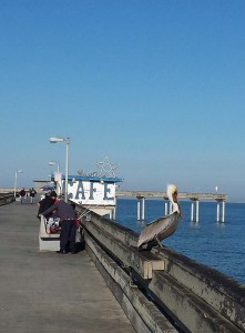 OB pier - pelican, fishermen and cafe in the background
