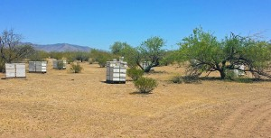 Bee hives in the middle of nowhere