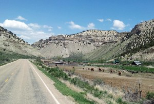 Cattle ranch at Indian Canyon
