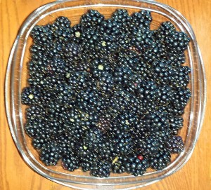 Container full of wild ripe, wild blackberries