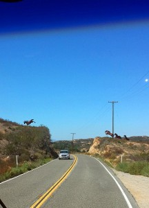 Wild horses jumping across highway 79 near Temecula