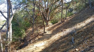 Trail in San Clemente Canyon