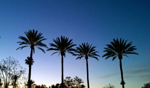 Palms in the sunset at the RV park