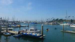 Oceanside south harbor - I didn't get a pic of the seal