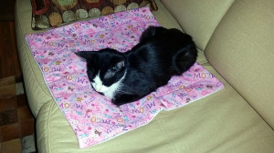 Ozark catching a nap on her blanket