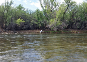 Egret flying down river