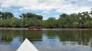 Wild horses off Donna's bow