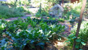 Part of the community vegetable garden
