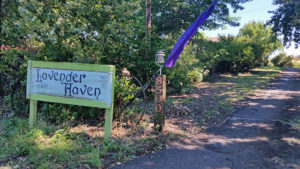 Lavender farm entrance