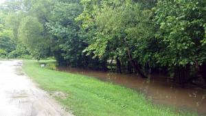 Flooded woods along Turkey Creek