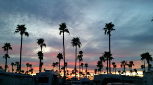 Sunset and palm trees at Towerpoint